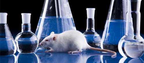 Preclinical studies for innovative drugs, generics, orphan drugs in mouse, rat, dog, rabbit, guinea pigs, non-primates models pharmacology and toxicology studies in Russia by CRO Pharegis
